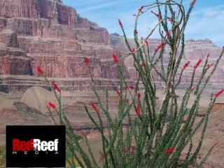 2007-04-28_Grand_Canyon_RGB15064288_x_2848